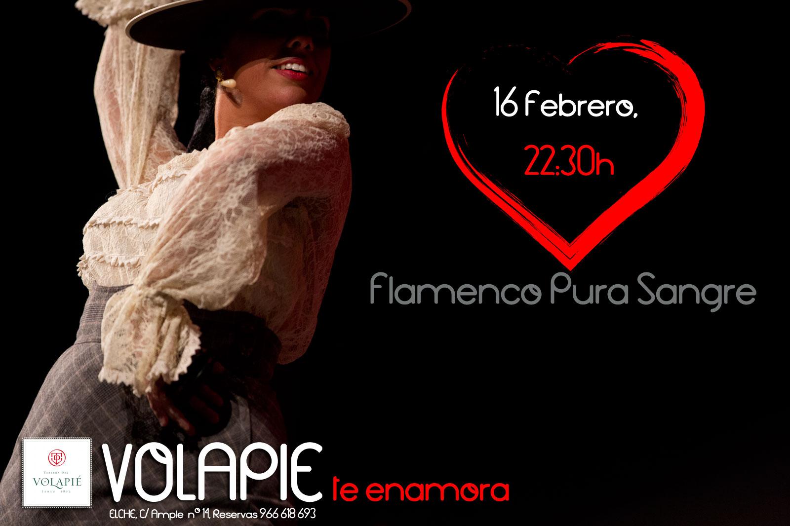 Flamenco Pura Sangre volapie